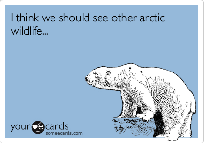 I think we should see other arctic wildlife...