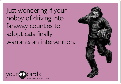 Just wondering if your hobby of driving into faraway counties to adopt cats finally warrants an intervention.