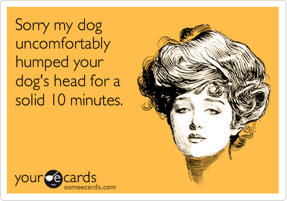 Sorry my dog