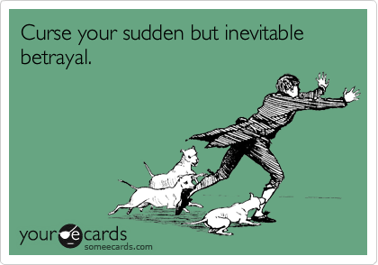 Betrayal | Fun Cat Pictures