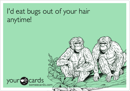 I'd eat bugs out of your hair anytime!