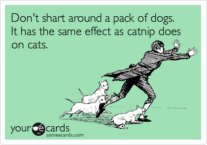 Don't shart around a pack of dogs. It has the same effect as catnip does on cats.