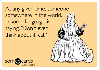 """At any given time, someone, somewhere in the world, in some language, is saying, """"Don't even think about it, cat."""""""