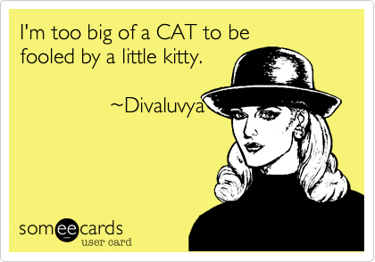 I'm too big of a CAT to be  fooled by a little kitty.                 ~Divaluvya