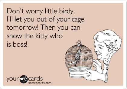Don't worry little birdy, I'll let you out of your cage tomorrow! Then you can show the kitty who is boss!