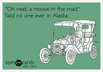 """""""Oh neat, a moose in the road.""""Said no one ever in Alaska"""