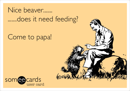 Nice beaver....... .......does it need feeding?  Come to papa!