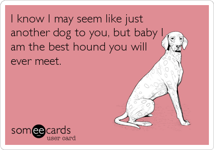 I know I may seem like just another dog to you, but baby I am the best hound you will ever meet.