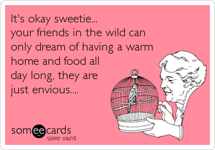 It's okay sweetie... your friends in the wild can only dream of having a warm home and food all day long, they are just envious....