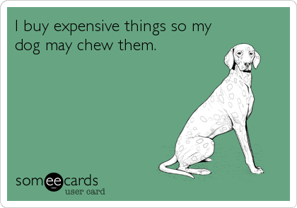 I buy expensive things so my dog may chew them.