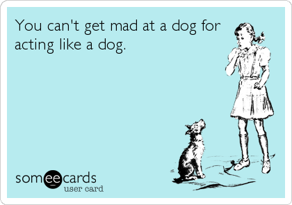 You can't get mad at a dog for acting like a dog.