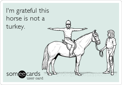 I'm grateful this horse is not a turkey.