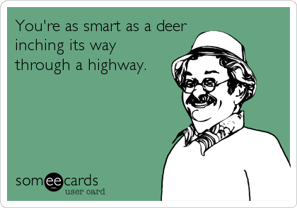 You're as smart as a deer inching its way through a highway.