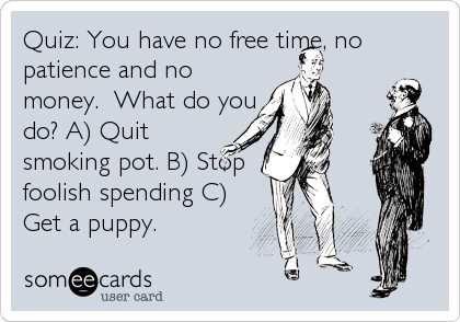 Quiz: You have no free time, no patience and no money.  What do you do? A) Quit smoking pot. B) Stop foolish spending C) Get a puppy.
