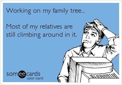 Working on my family tree...  Most of my relatives are still climbing around in it.
