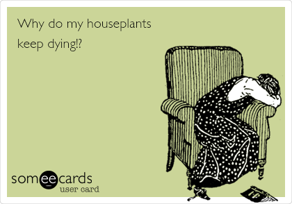 Why do my houseplants keep dying!?