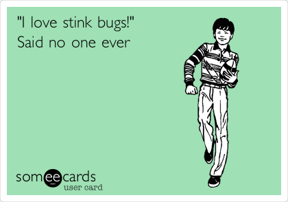 """I love stink bugs!"" Said no one ever"