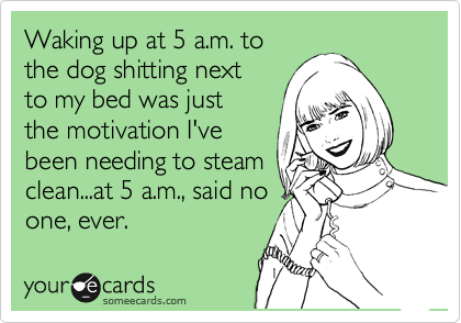 Waking up at 5 a.m. to the dog shitting next to my bed was just the motivation I've been needing to steam clean...at 5 a.m., said no one, ever.