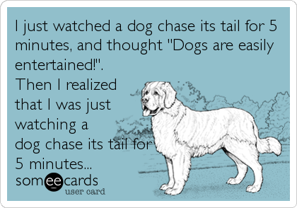 """I just watched a dog chase its tail for 5 minutes, and thought """"Dogs are easily entertained!"""". Then I realized that I was just watching a dog chase its tail for 5 minutes..."""