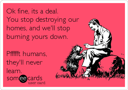 Ok fine, its a deal. You stop destroying our homes, and we'll stop burning yours down.  Pffffft humans, they'll never learn.