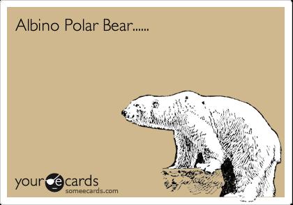 Albino Polar Bear......