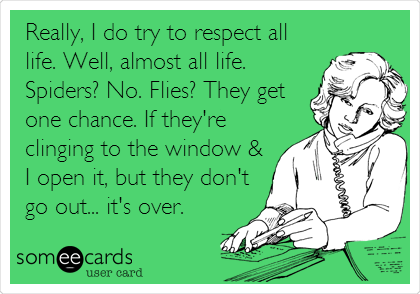 Really, I do try to respect all life. Well, almost all life. Spiders? No. Flies? They get one chance. If they're clinging to the window & I open it, but they don't go out... it's over.