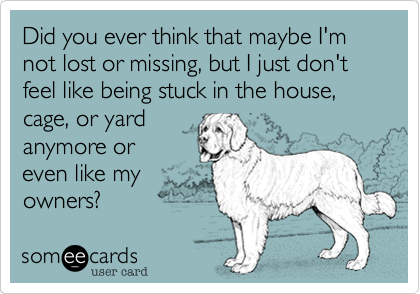 Did you ever think that maybe I'm not lost or missing, but I just don't feel like being stuck in the house, cage, or yard anymore or even like my owners?