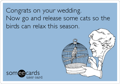Congrats on your wedding. Now go and release some cats so the birds can relax this season.