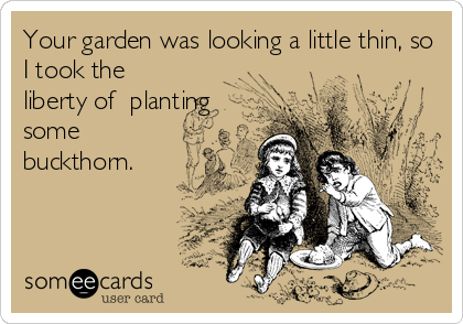 Your garden was looking a little thin, so I took the liberty of  planting some buckthorn.
