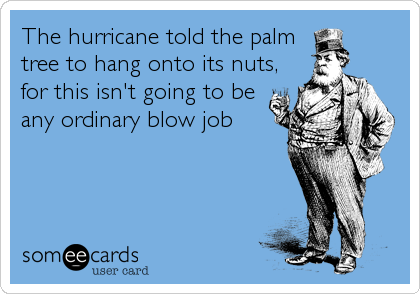 The hurricane told the palm