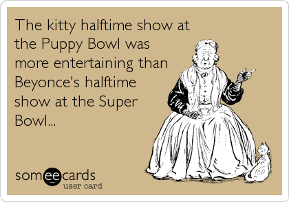 The kitty halftime show at the Puppy Bowl was more entertaining than Beyonce's halftime show at the Super Bowl...