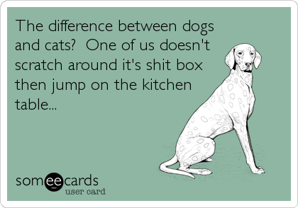 The difference between dogs and cats?  One of us doesn't  scratch around it's shit box then jump on the kitchen  table...