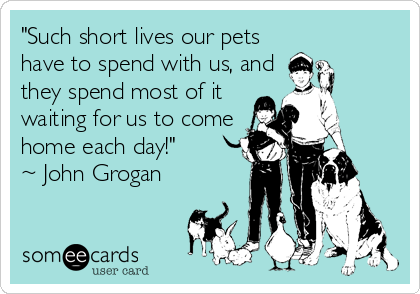 """Such short lives our pets have to spend with us, and they spend most of it waiting for us to come home each day!""   ~ John Grogan"
