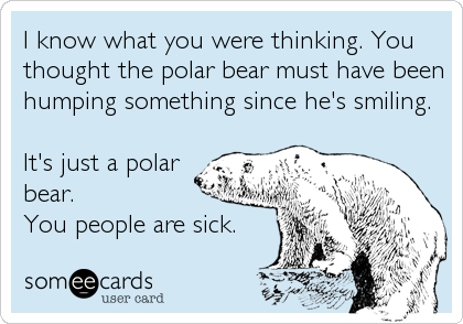 I know what you were thinking. You thought the polar bear must have been humping something since he's smiling.  It's just a polar bear.