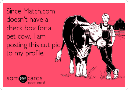 Since Match.com doesn't have a check box for a pet cow, I am posting this cut pic to my profile.