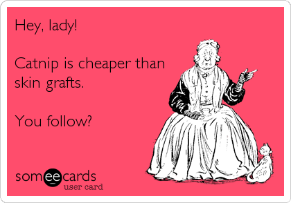 Hey, lady!  Catnip is cheaper than skin grafts.  You follow?
