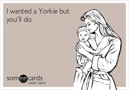 I wanted a Yorkie but you'll do.