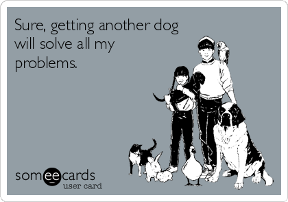 Sure, getting another dog will solve all my problems.