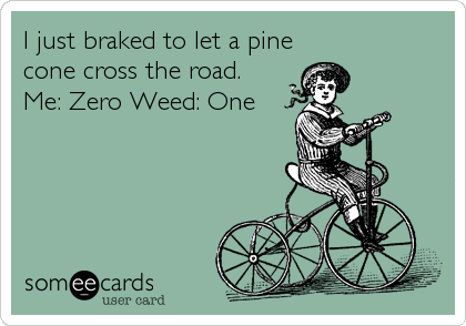 I just braked to let a pine cone cross the road.   Me: Zero Weed: One