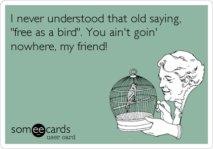 """I never understood that old saying, """"free as a bird"""". You ain't goin' nowhere, my friend!"""