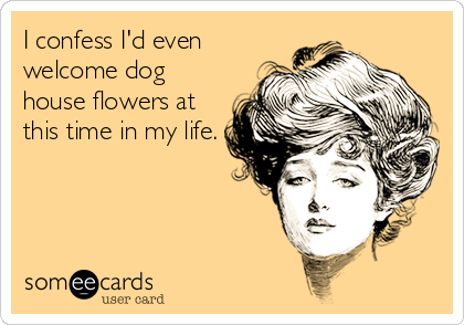 I confess I'd even welcome dog house flowers at this time in my life.