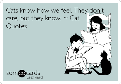 Cats know how we feel. They don't care, but they know. ~ Cat Quotes