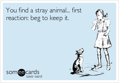 You find a stray animal... first reaction: beg to keep it.