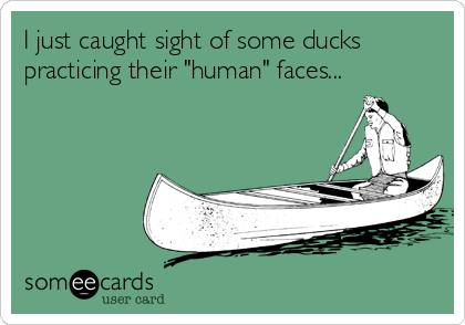 "I just caught sight of some ducks practicing their ""human"" faces..."