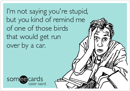 I'm not saying you're stupid, but you kind of remind me of one of those birds that would get run  over by a car.