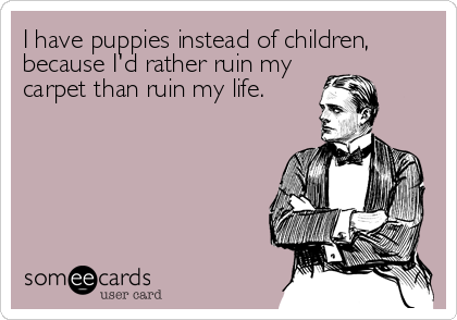 I have puppies instead of children, because I'd rather ruin my carpet than ruin my life.
