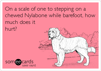 On a scale of one to stepping on a chewed Nylabone while barefoot, how much does it hurt?