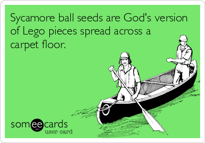 Sycamore ball seeds are God's version of Lego pieces spread across a carpet floor.