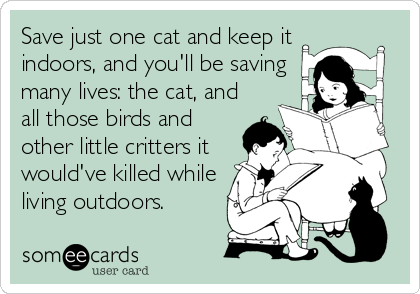 Save just one cat and keep it indoors, and you'll be saving many lives: the cat, and all those birds and other little critters it would've killed while living outdoors.