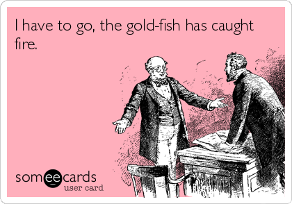 I have to go, the gold-fish has caught fire.